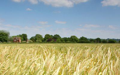 Buen clima para el riesgo agropecuario
